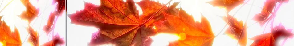 őszi  fejléc