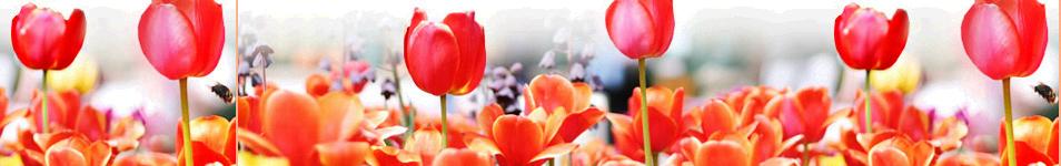 tavaszi fejléc 5